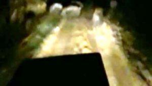 Mısır tarlasında domuz nöbeti