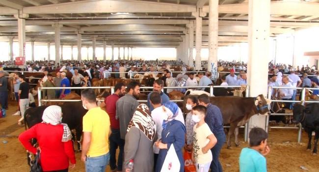 Şanlıurfa Kurban Pazarı'nda son gün yoğunluğu ( Video Haber )