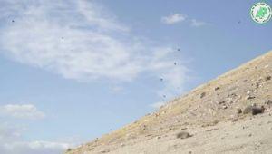 Yeşil Arıkuşu Şanlıurfa bozkırlarında görüntülendi ( Video Haber )